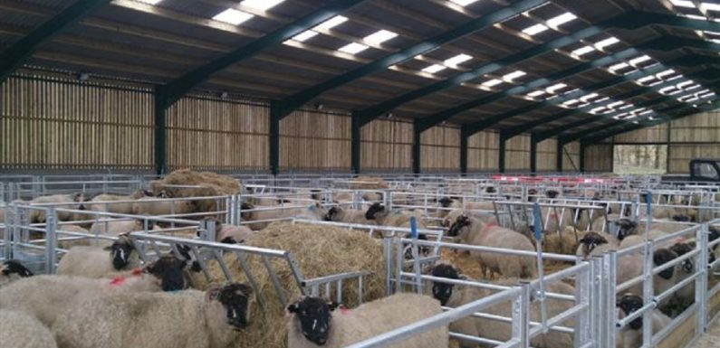 Creating the Best and Reliable Sheep Shed Design